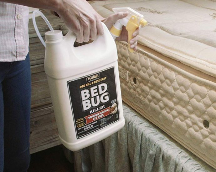 The Nuiances Of Ideal Bed Insect Repellent